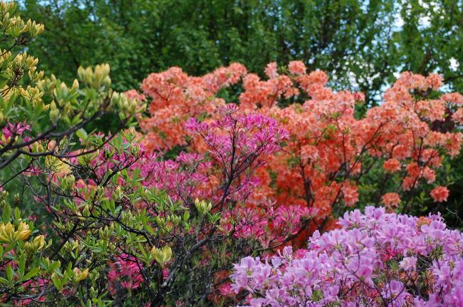 Arboretum Rainbow