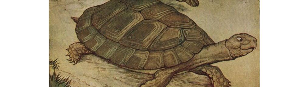 TortoiseBanner